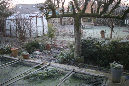 White frost cold freezing morning in English country garden with espalier pear tree lavender bush barren trees and plants greenhouse in Winter with icy frozen fish pond covered in mesh heron protection in Norfolk East Anglia and wood bench on lawn Standard-Bild