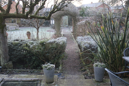 Espalier Pear tree in white frost cold freezing morning in English country garden with espalier pear tree lavender bush barren trees and plants greenhouse in Winter with secret door & path under a rose arch and patio furniture of table chair in Norfolk East Anglia