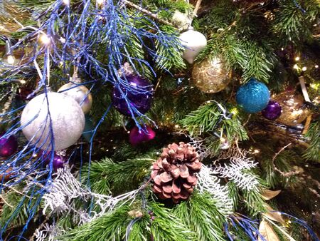 Close up of festive Christmas tree with decorations in blue white silver purple of celebration baubles globe balls glass and snow cones gold and ornaments against the green fir branches in December
