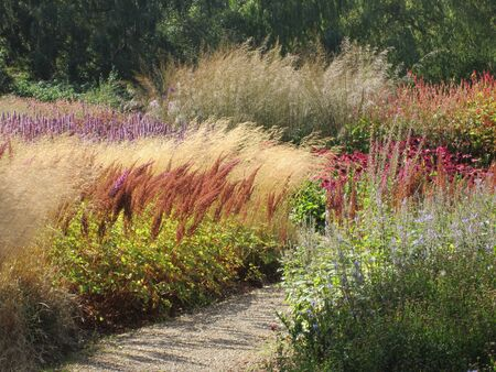 Superbe paysage magnifique d'herbes multicolores poussant dans le jardin de la réserve naturelle rose, violet, jaune, vert, mauve, marron, avec un chemin de gravier qui s'éloigne sous le soleil d'été avec des ombres