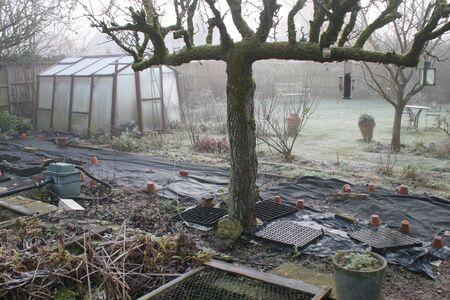 Schöne winterliche gefrorene Landschaft mit Glasgewächshaus, frostiger, kalter Morgen im eisigen englischen Garten mit Spalierbirnbaumbusch kargen Bäumen und Pflanzen Rasentisch-Sitzpfad unter einem Rosenbogen Standard-Bild