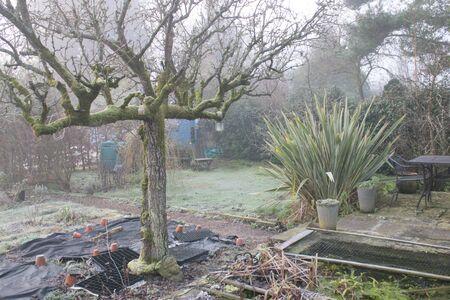 Schöne frostige, eisige Eislandschaft im organischen englischen Garten mit Spalierbirnenbäumen, Sträuchern, Topfpflanzen im Winter mit einem Kiesweg, der unter einem Rosenbogen durch Rasenflächen führt Standard-Bild