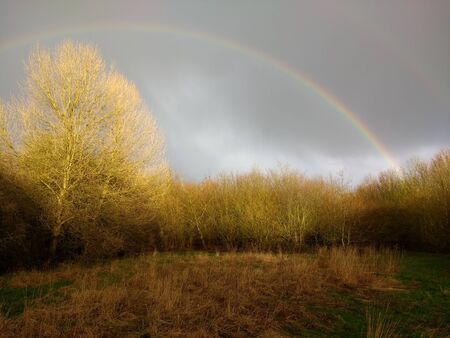 Rainbow on beautiful Spring natural outdoor landscape of stunning calming light before grey storm sky with yellow blush tone touching over top trees branches by lake of water with reflections & green grass