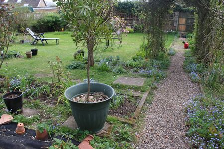 Landscape view of English country organic garden in early Summer with nature bursting forth with patio metal table and chairs, gravel path, fruit trees, exotic plants grass lawn, blossom gravel path