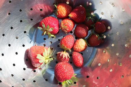 Close up of freshly picked strawberries, the delicious garden harvested organic red fruits with green stalks in metal colander dish viewed from above outdoors in English allotment fresh air Фото со стока