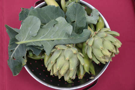 Close up globe artichokes, broccoli, beans in metal colander bowl, nutritious organic raw vegetables  & leaves harvest from allotment garden beds home grown Summer, red background interior above view