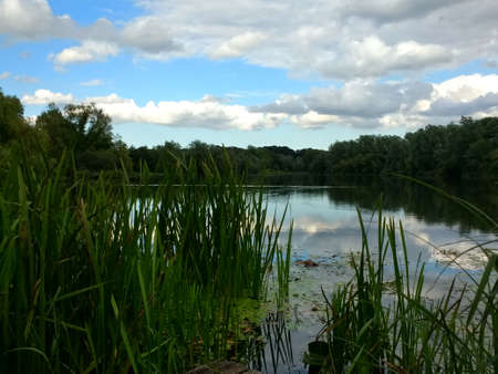 Beautiful landscape view of Braod water at University of East Anglia grounds Norwich with tranquil waters with white cloud, blue sky and trees reflected and green reed plants at edges of fishing lake