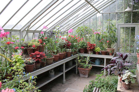 Landscape of glass greenhouse with wood with flowers and plants pots in organic country English garden in Summer daylight grass bushes in border by lawn