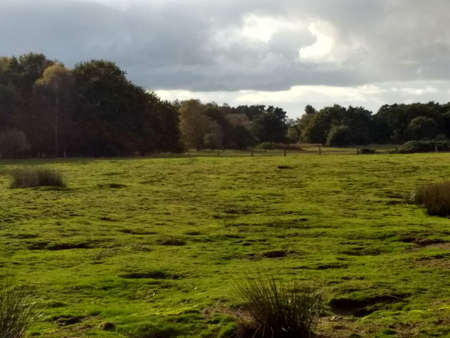 Landscape view of nature reserve environment with grazing fields trees and beautiful marshland with wildlife by ancient mere for common land walk in Brandon in Suffolk East Anglia England