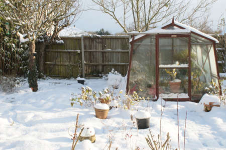 Winter landscape snow scene of glass greenhouse in organic English garden with plants and trees after snowfall with white layer over everything including lawn, fence in background in freezing weather