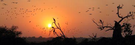 birds migration Stock Photo