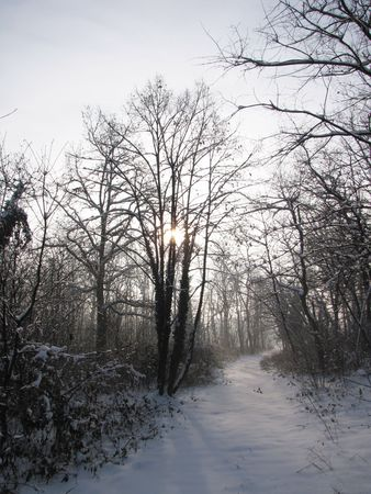 snowlandscape: silence in the wood during winter time Stock Photo