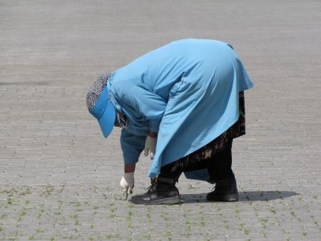 tiresome: patient gardener at work