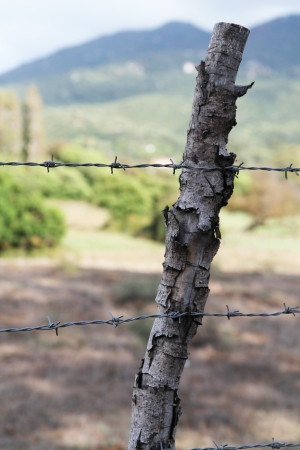 barbed wire Stock Photo - 14066716
