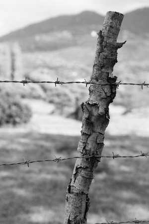 barbed wire Stock Photo - 14071413