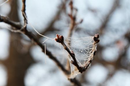 spider net: spider net frozen in the bad season