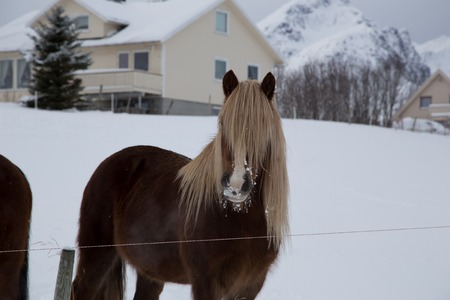 horse at farmhouse during winter time photo