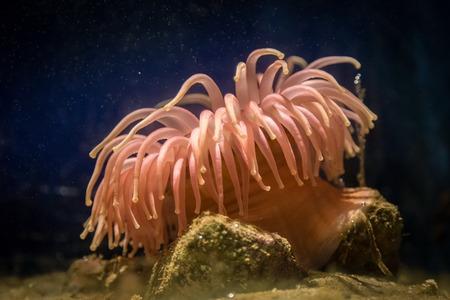 florescent light: anemone