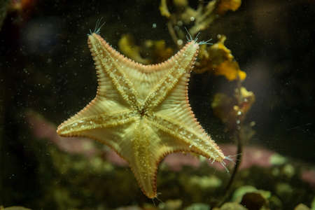 sealife: starfish