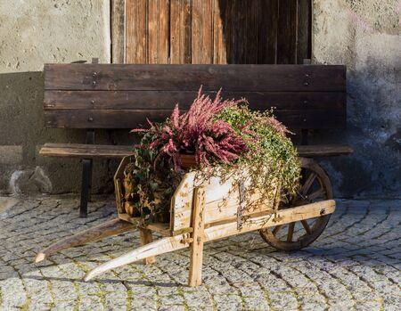 garden flowers: flower in the wheelbarrow for decoration