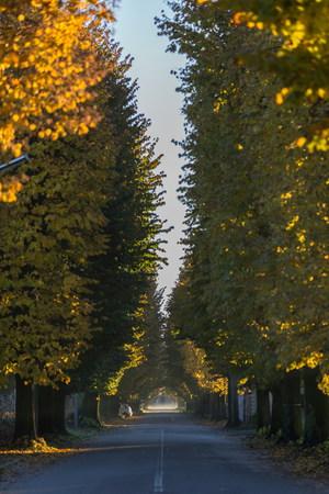 teh: autumn street in teh morning Stock Photo