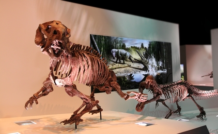 paleolithic: Houston, USA, April 2013: the skeletons of ancient mammals in HMNS