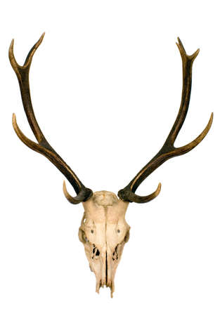elk horn: This is horns of deer very well kept