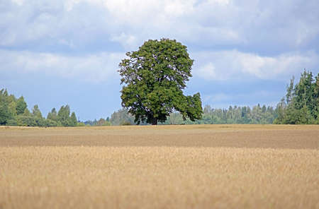 weald: There is green tree in weald near forest Stock Photo