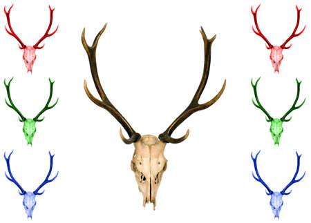 It is horn of deer in various colors photo
