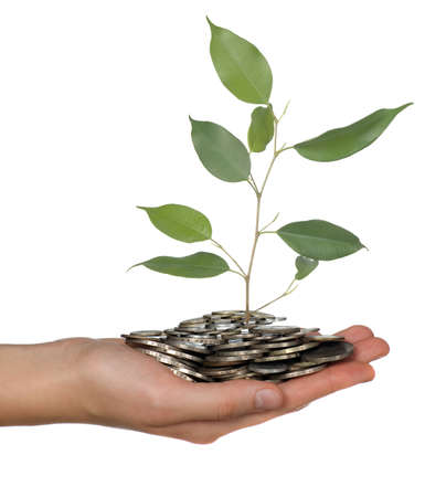 Money and branch is being hold in hands photo