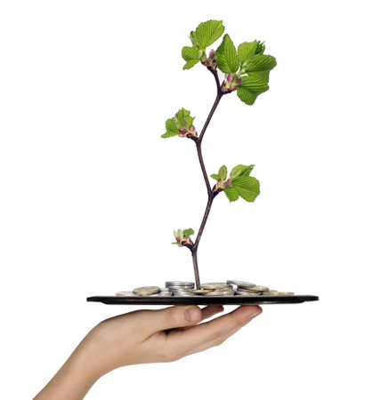 Man is holding tray with money and branch Stock Photo - 6995825
