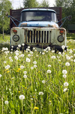 There is old antique truck on field of dandelions photo