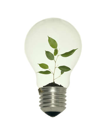 Light bulb with small tree on white background