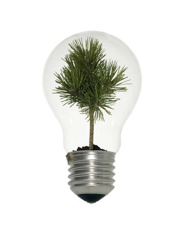 Light bulb with small tree on white background photo