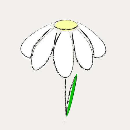 margriet: Bloem marguerite met één blad is alleen op grijze achtergrond
