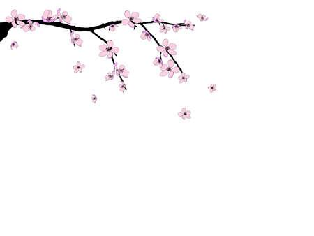 Branch of beautiful seasonal pink cherry blossom Stock Vector - 12859559