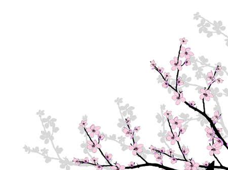 ramo di ciliegio: Filiale di bella stagione fiore rosa ciliegia Vettoriali