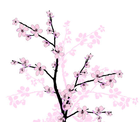 Branch of beautiful seasonal pink cherry blossom  Stock Vector - 12859568