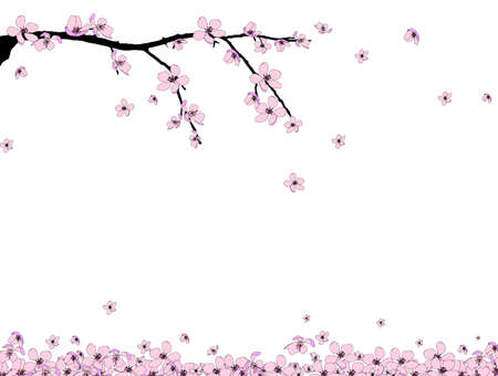 blossom tree: Branch of beautiful seasonal pink cherry blossom
