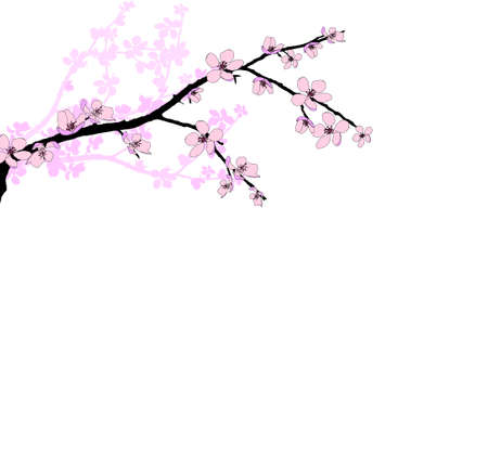 Branch of beautiful seasonal pink cherry blossom  Vector