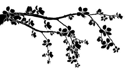 ramo di ciliegio: Ramo nero di belle fioriture di ciliegio Vettoriali