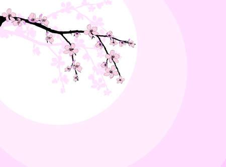 asian gardening: Branch of beautiful seasonal pink cherry blossom