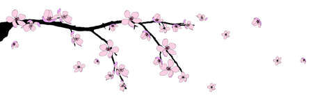 blossom background: Branch of beautiful seasonal pink cherry blossom