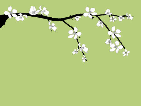 cherry blossom illustration: Branch of beautiful seasonal white cherry blossom