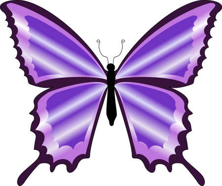 There is a beautiful colorful purple butterfly