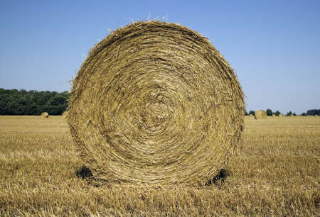 haystack: There are many haycocks in the field