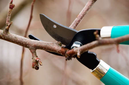 Scissors is cutting branches from tree, trimming Stock Photo