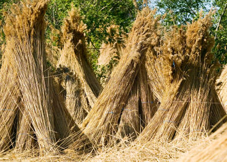 bale: Dry straw, nature concept, background or texture