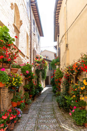 alleys of spello decorated with plants and characteristic flowers Editorial