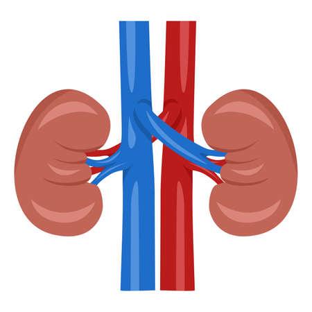 de illustratie gewijd aan de humane nier.
